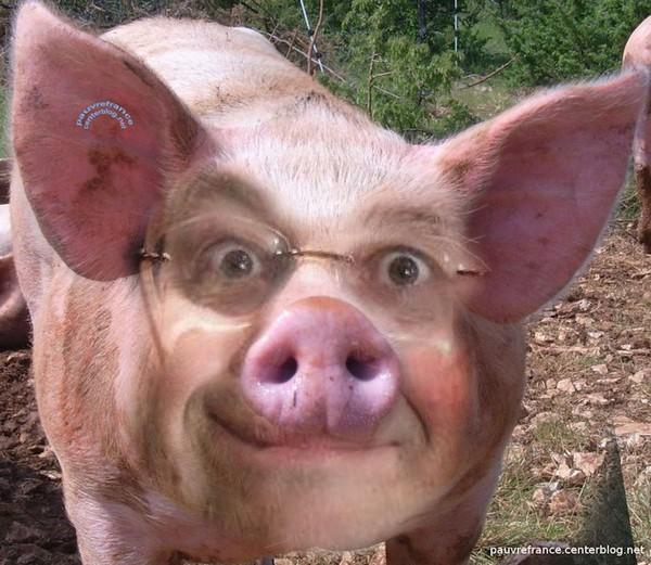François le porcinet